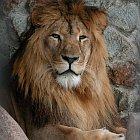 Какой знак зодиака подходит льву мужчине