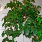 Учение Фен-Шуй: комнатные растения - мужегоны и их свойства