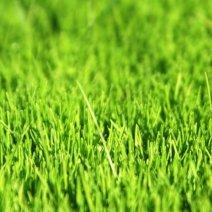 Приснилась зеленая трава — нюансы толкования по сонникам