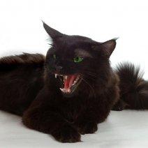 Снится кошка с котятами: к чему бы это?
