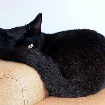 Что означает видеть во сне черного фото